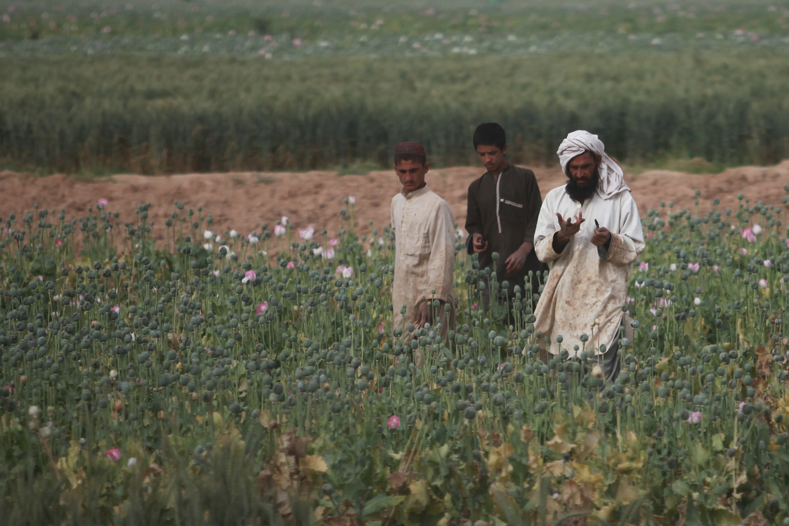 USopium U.S. Troops Patrolling Poppy Fields In Afghanistan (Photos)