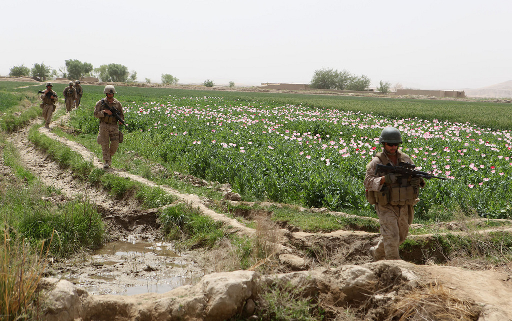 USopium10 U.S. Troops Patrolling Poppy Fields In Afghanistan (Photos)