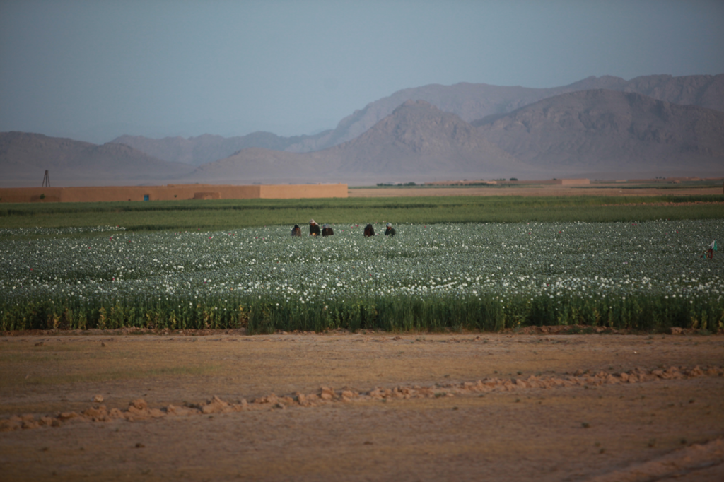 USopium12 1024x682 U.S. Troops Patrolling Poppy Fields In Afghanistan (Photos)
