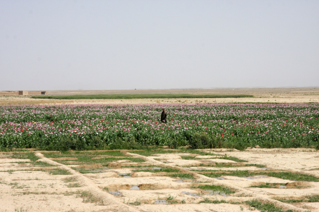 USopium4 1024x682 U.S. Troops Patrolling Poppy Fields In Afghanistan (Photos)