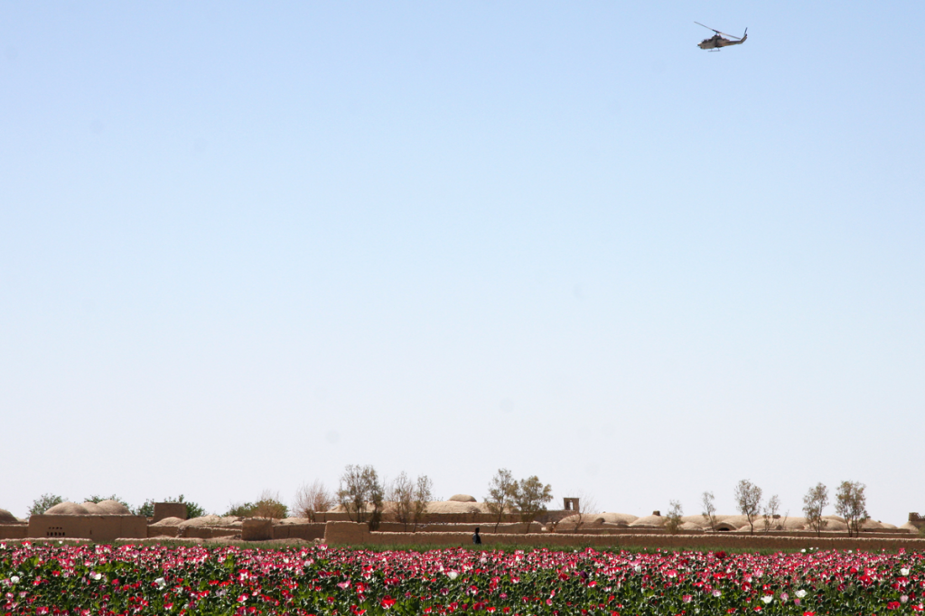 USopium5 1024x682 U.S. Troops Patrolling Poppy Fields In Afghanistan (Photos)