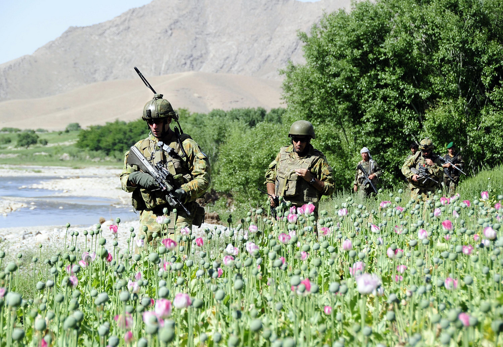 USopium6 U.S. Troops Patrolling Poppy Fields In Afghanistan (Photos)