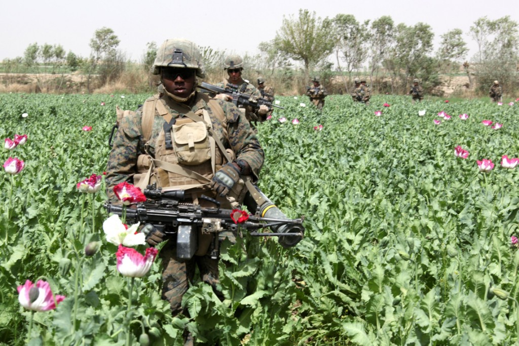 USNATO poppies1 1024x682 U.S. Troops Patrolling Poppy Fields In Afghanistan (Photos)