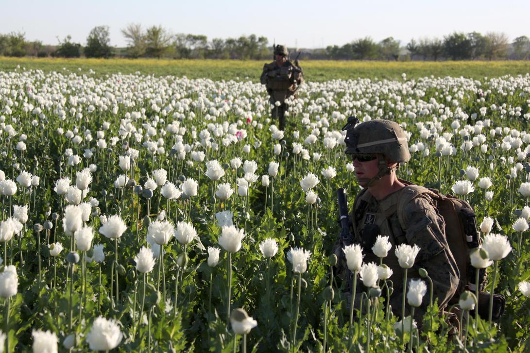 More Photos Of Usnato Troops Patrolling Opium Poppy Fields In