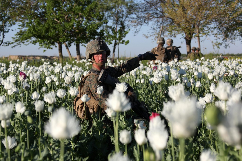 USNATO poppies12 1024x682 U.S. Troops Patrolling Poppy Fields In Afghanistan (Photos)