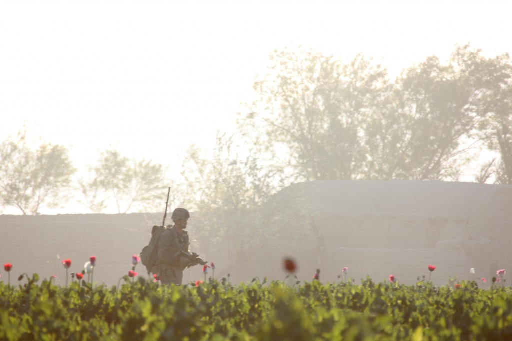 USNATO poppies14 1024x682 U.S. Troops Patrolling Poppy Fields In Afghanistan (Photos)