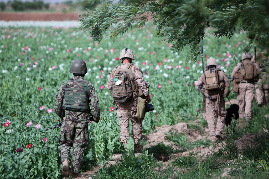 USNATO poppies16 U.S. Troops Patrolling Poppy Fields In Afghanistan (Photos)