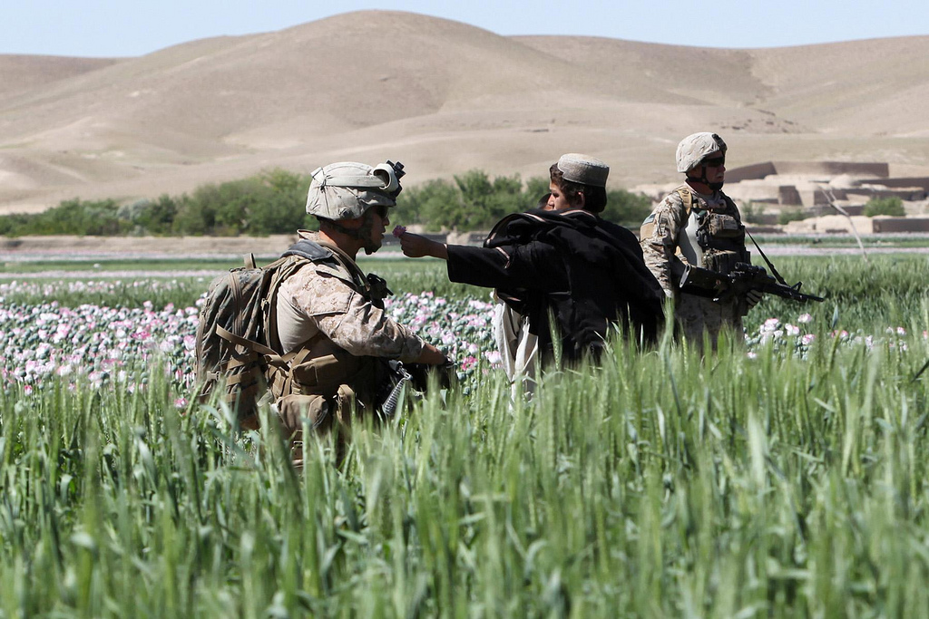 USNATO poppies17 U.S. Troops Patrolling Poppy Fields In Afghanistan (Photos)
