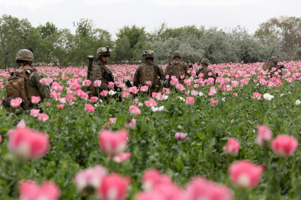 USNATO poppies2 1024x682 U.S. Troops Patrolling Poppy Fields In Afghanistan (Photos)
