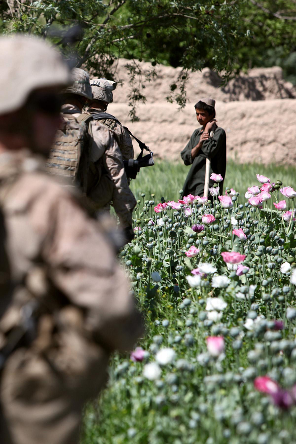 USNATO poppies3 U.S. Troops Patrolling Poppy Fields In Afghanistan (Photos)