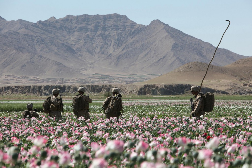USNATO poppies4 1024x682 U.S. Troops Patrolling Poppy Fields In Afghanistan (Photos)