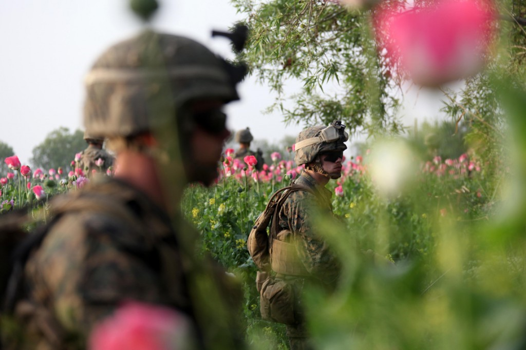 USNATO poppies5 1024x682 U.S. Troops Patrolling Poppy Fields In Afghanistan (Photos)