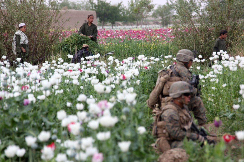 USNATO poppies6 1024x682 U.S. Troops Patrolling Poppy Fields In Afghanistan (Photos)
