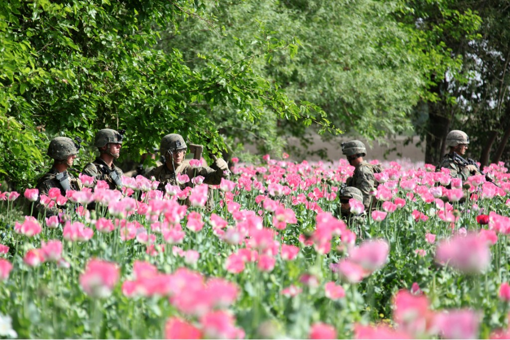 USNATO poppies7 1024x682 U.S. Troops Patrolling Poppy Fields In Afghanistan (Photos)