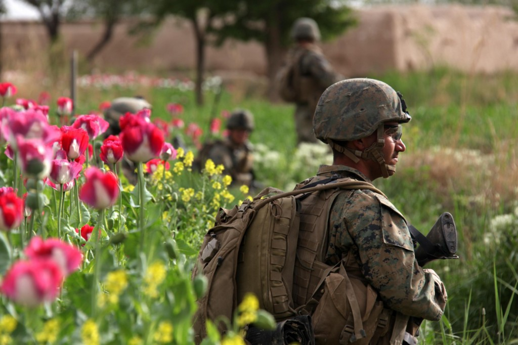 USNATO poppies8 1024x682 U.S. Troops Patrolling Poppy Fields In Afghanistan (Photos)