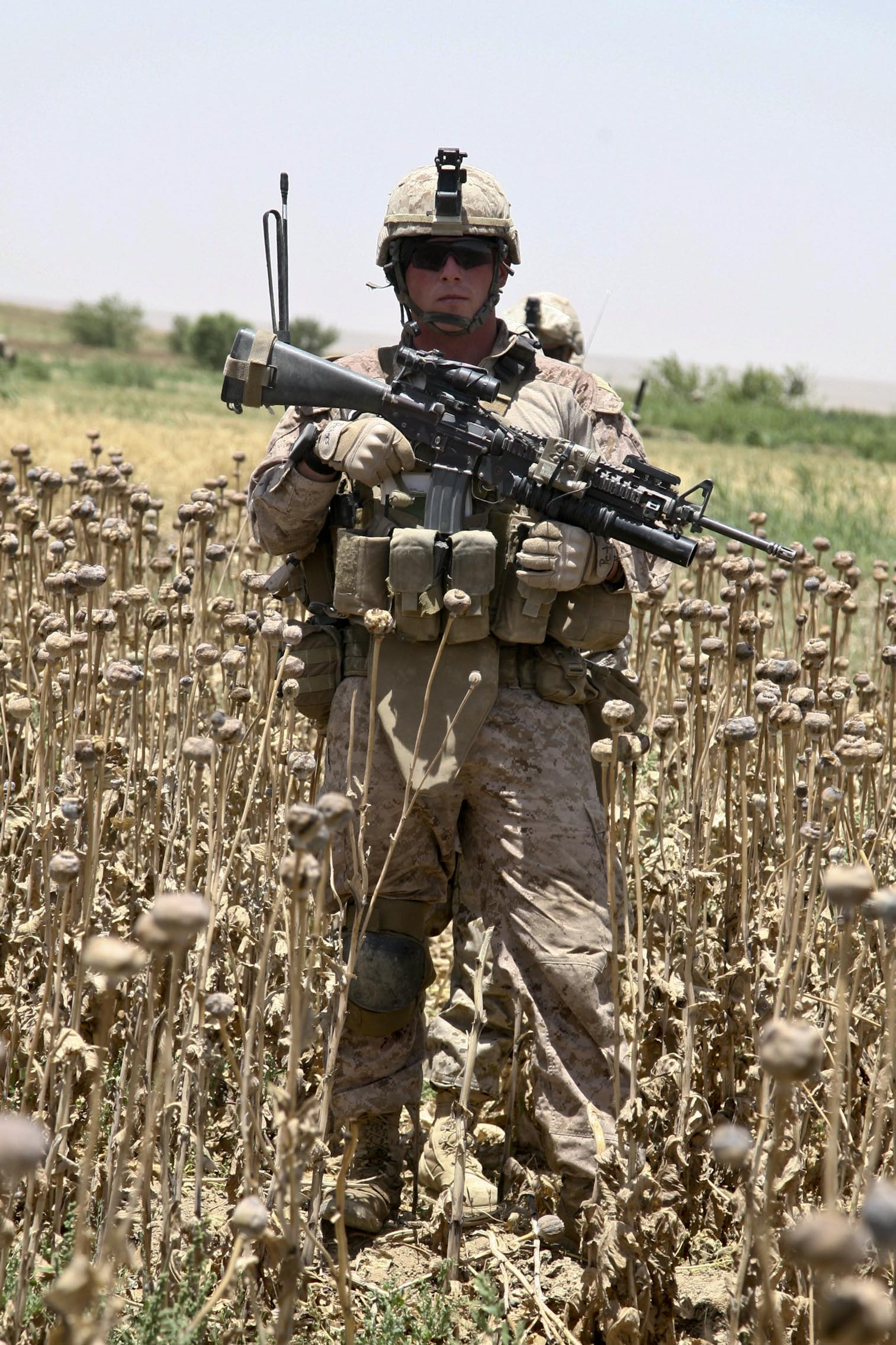 opium field 8 U.S. Troops Patrolling Poppy Fields In Afghanistan (Photos)