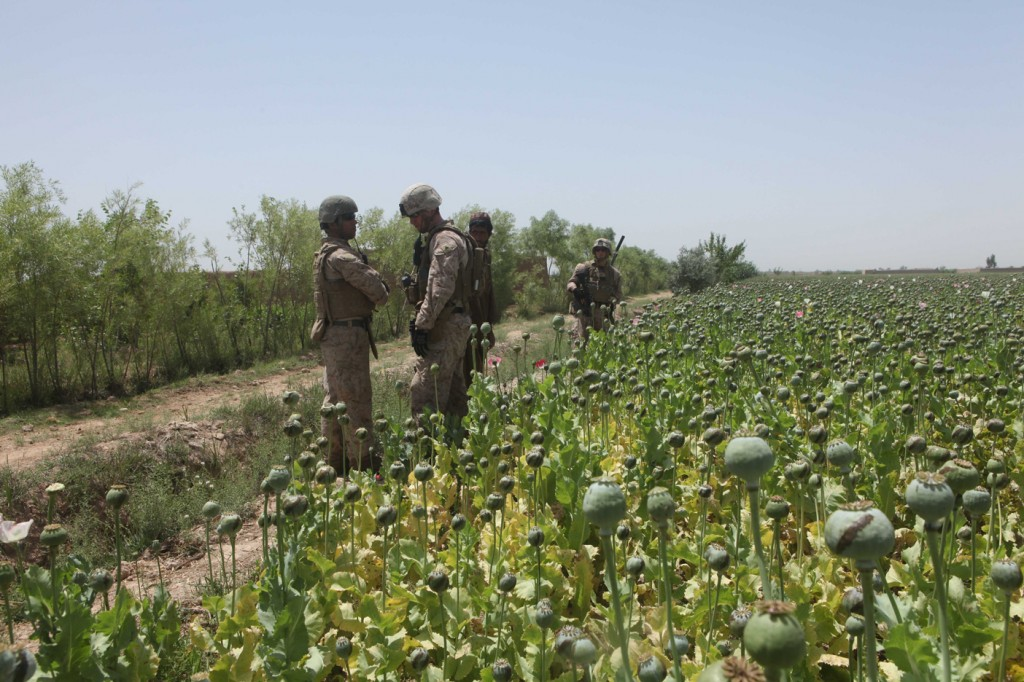 opium fields10 1024x682 U.S. Troops Patrolling Poppy Fields In Afghanistan (Photos)