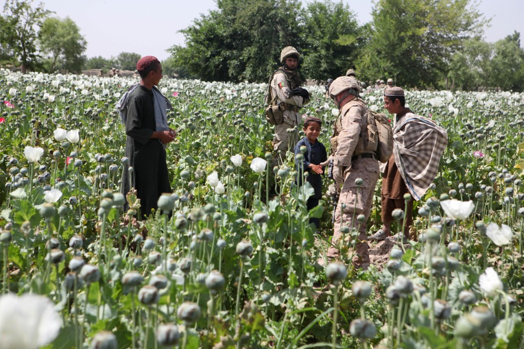 opium fields15 1024x682 U.S. Troops Patrolling Poppy Fields In Afghanistan (Photos)