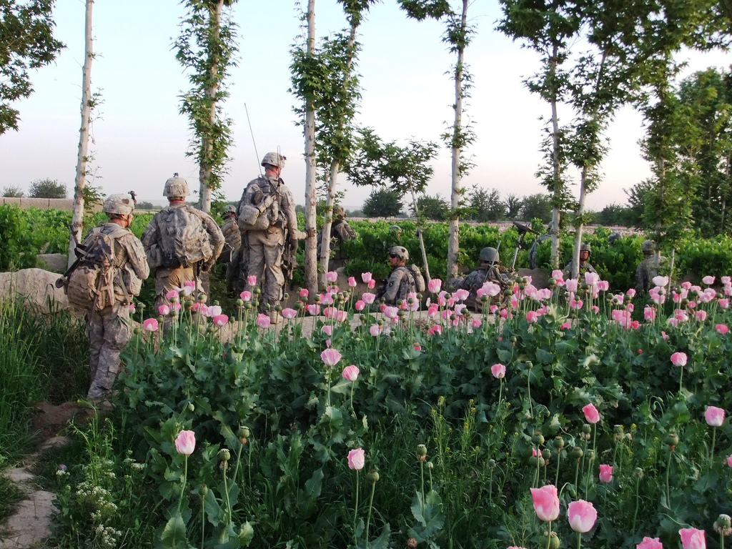 opium fields16 U.S. Troops Patrolling Poppy Fields In Afghanistan (Photos)