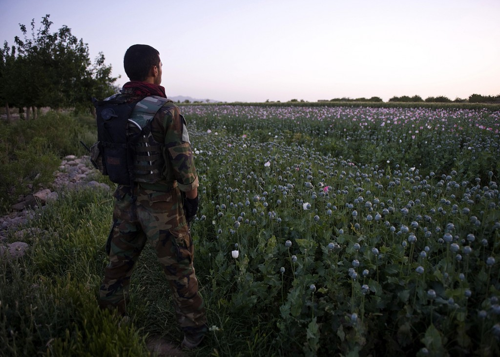 opium fields2 1024x731 U.S. Troops Patrolling Poppy Fields In Afghanistan (Photos)