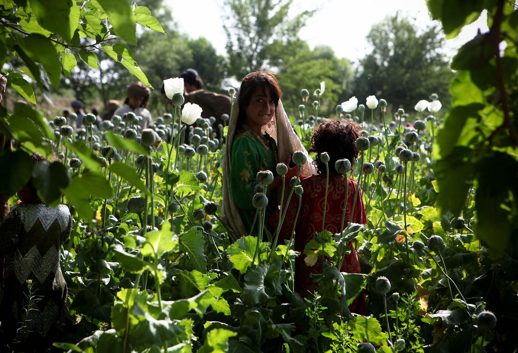 opium fields5 U.S. Troops Patrolling Poppy Fields In Afghanistan (Photos)