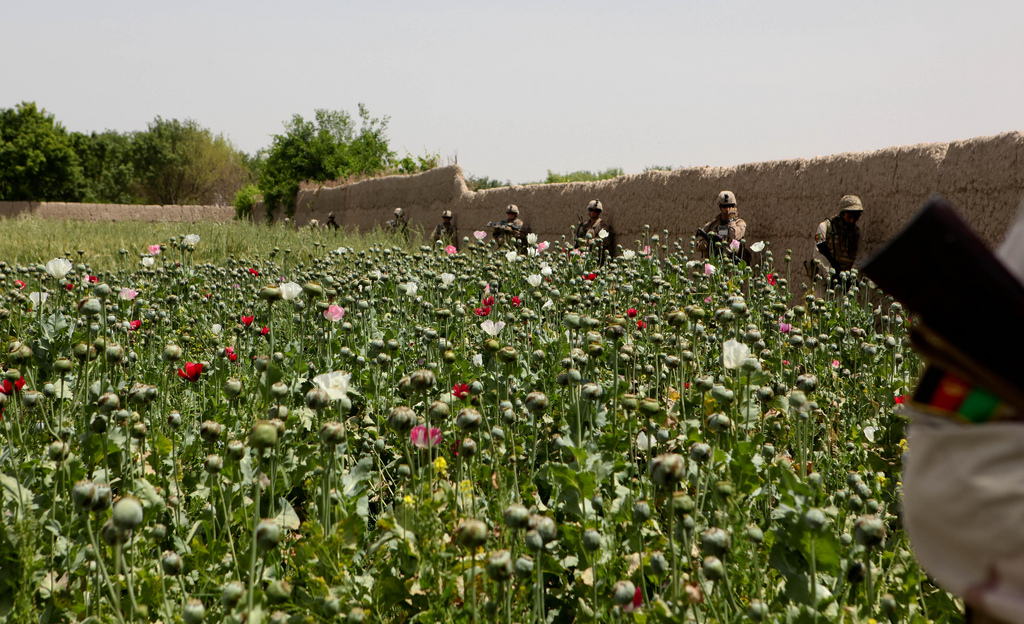 opium fields6 U.S. Troops Patrolling Poppy Fields In Afghanistan (Photos)