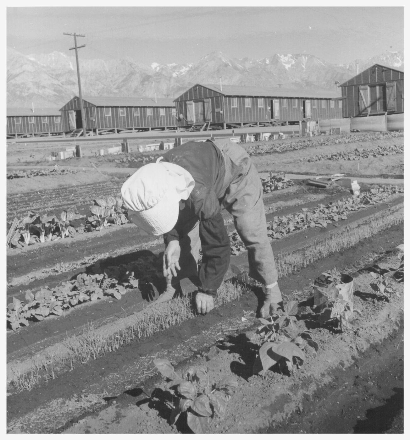 japanese internment camps Watch video family separation is being compared to japanese internment it took decades for the us to admit that policy was wrong.