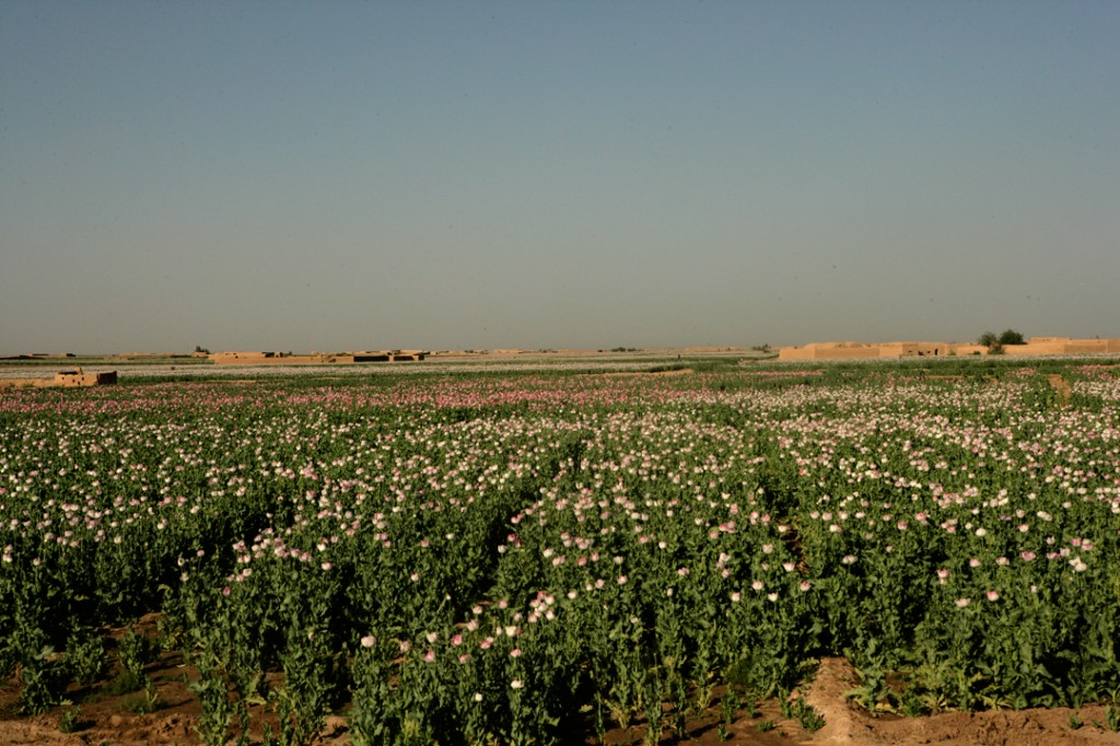 opium fields 1 1024x682 U.S. Troops Patrolling Poppy Fields In Afghanistan (Photos)