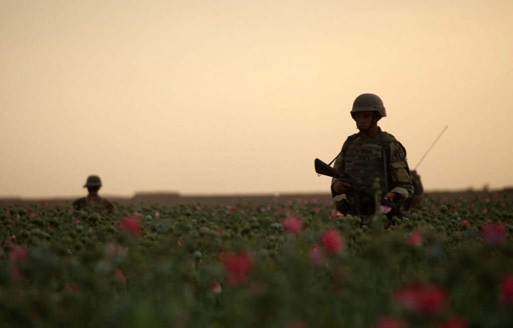 opium fields 10 1024x656 U.S. Troops Patrolling Poppy Fields In Afghanistan (Photos)
