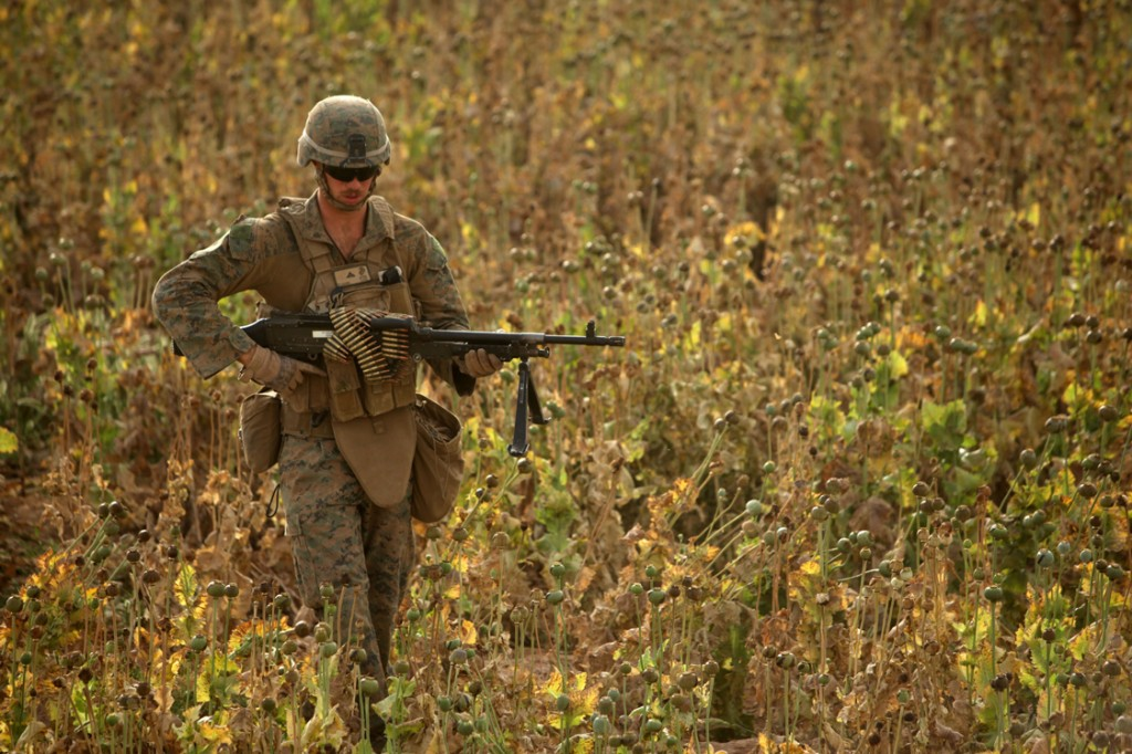 opium fields 12 1024x682 U.S. Troops Patrolling Poppy Fields In Afghanistan (Photos)