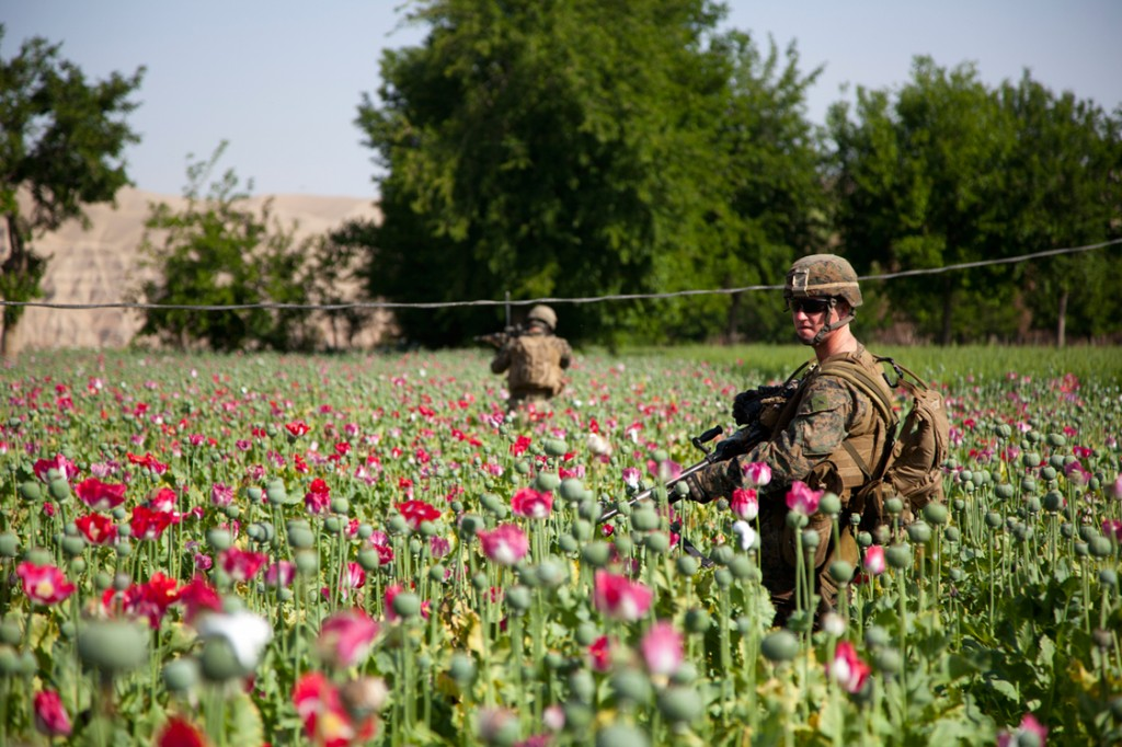 U.S. Occupation Leads to All Time High Afghan Opium Production opium fields 13 1024x682