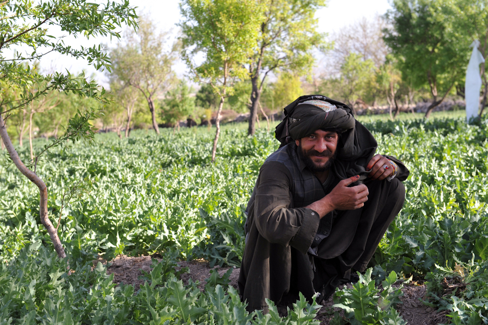 opium fields 14 U.S. Troops Patrolling Poppy Fields In Afghanistan (Photos)