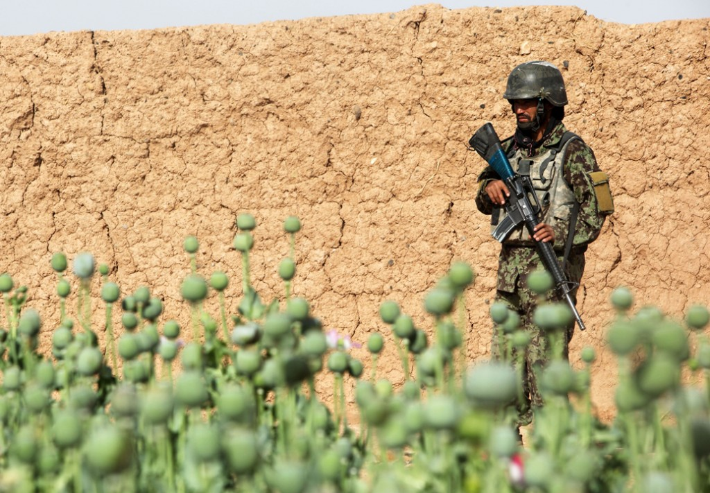 opium fields 15 1024x711 U.S. Troops Patrolling Poppy Fields In Afghanistan (Photos)