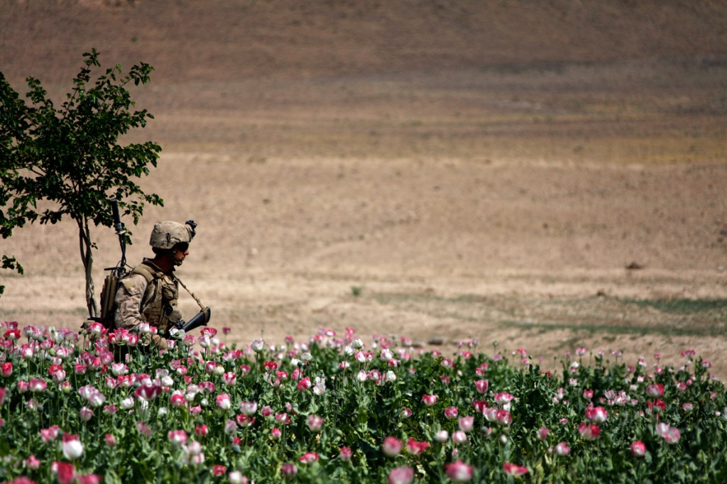 opium fields 17 1024x682 U.S. Troops Patrolling Poppy Fields In Afghanistan (Photos)