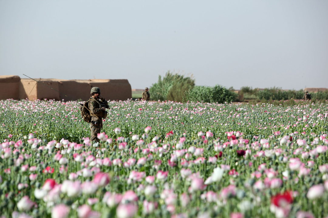 opium fields 18 U.S. Troops Patrolling Poppy Fields In Afghanistan (Photos)