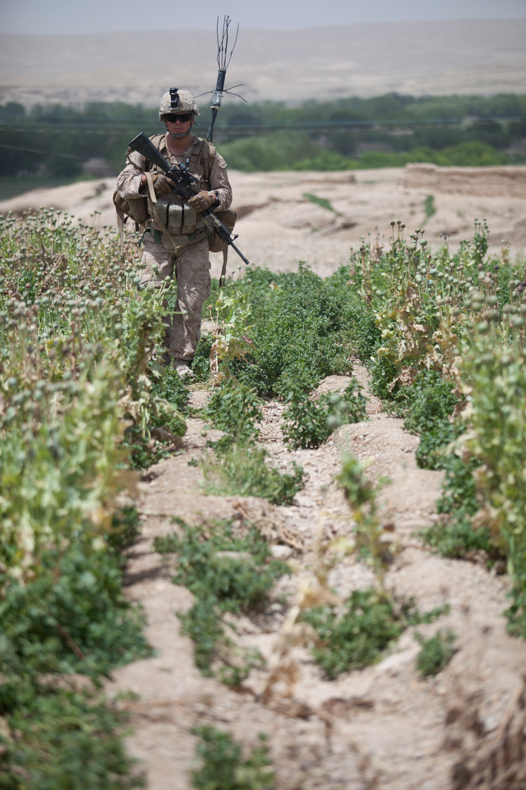 opium fields 19 U.S. Troops Patrolling Poppy Fields In Afghanistan (Photos)