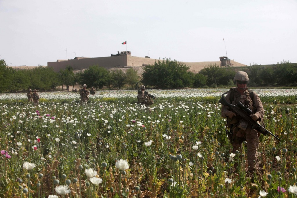 opium fields 6 1024x682 U.S. Troops Patrolling Poppy Fields In Afghanistan (Photos)