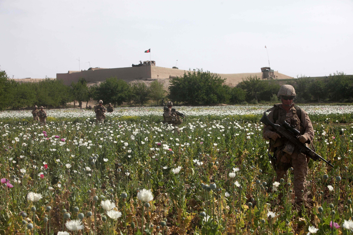 Photos Of Us And Afghan Troops Patrolling Poppy Fields June 2012