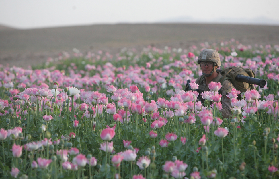 opium fields 7 U.S. Troops Patrolling Poppy Fields In Afghanistan (Photos)
