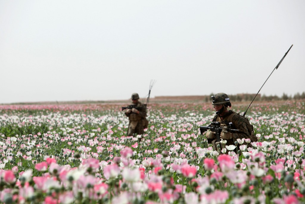 opium fields 9 1024x685 U.S. Troops Patrolling Poppy Fields In Afghanistan (Photos)